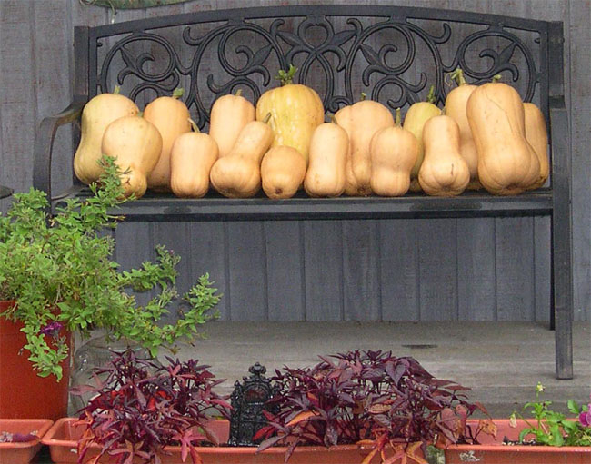 Butternut squash on porch bench